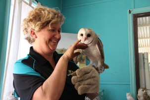 "Raptor rescuer Janelle Ende gives her new patient, 12 week old barn owl ""Willow"", a well deserved scratch under the chin. Picture: Jon Solmundson"